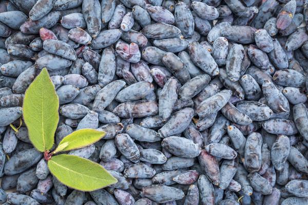 background of fresh honeysuckle berry  Stock photo © PixelsAway