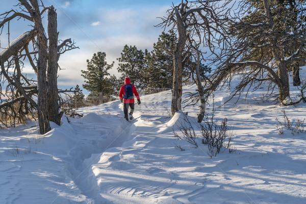 Winter wandelen Colorado eenzaam wandelaar ochtend Stockfoto © PixelsAway
