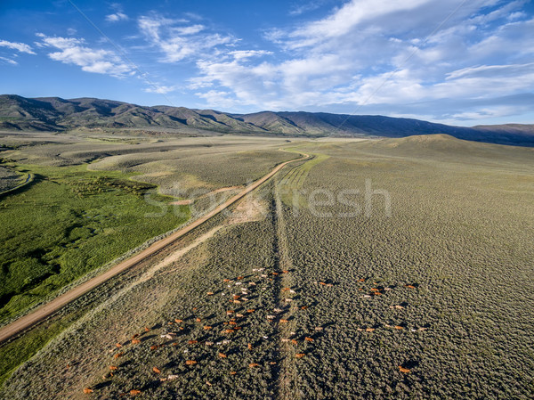 ранчо дороги скота север парка Колорадо Сток-фото © PixelsAway