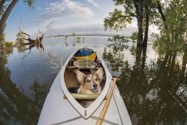 Kenu kutya expedíció tó Colorado eltorzult Stock fotó © PixelsAway