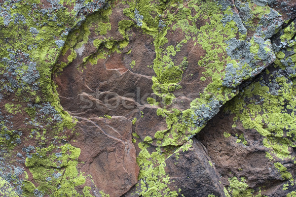 Sandstone rock with silver and green yellow lichen Stock photo © PixelsAway
