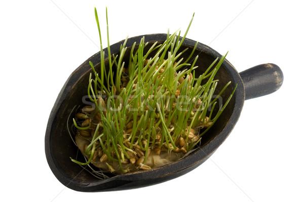 Kepçe kırmızı kış buğday tahıl ahşap Stok fotoğraf © PixelsAway