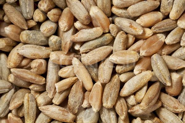 Rozs magvak bogyók textúra gabona makró Stock fotó © PixelsAway