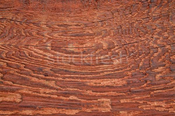 Piros viharvert csőr fa textúra foltos makró Stock fotó © PixelsAway