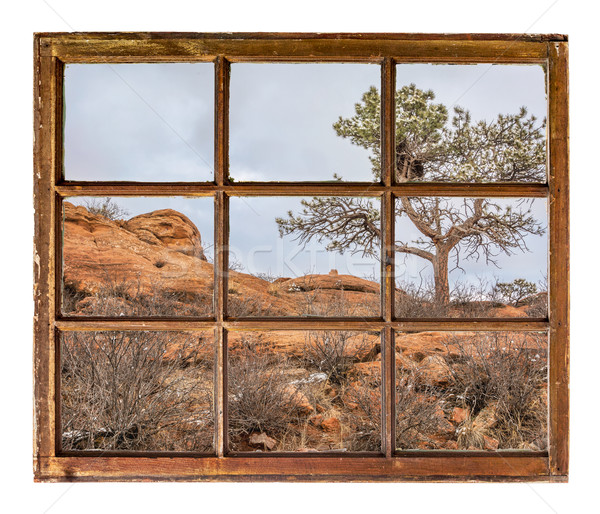 pine tree on sandstome cliff window view Stock photo © PixelsAway
