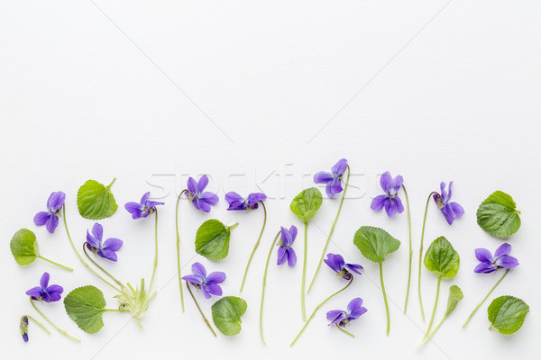 viola flowers on art canvas Stock photo © PixelsAway