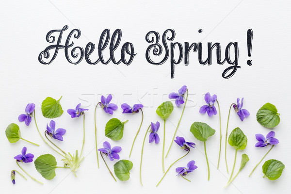 Hello Spring greetings  Stock photo © PixelsAway