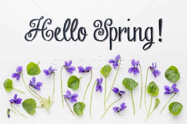 Hello tavasz üdvözlet friss virágok levelek Stock fotó © PixelsAway