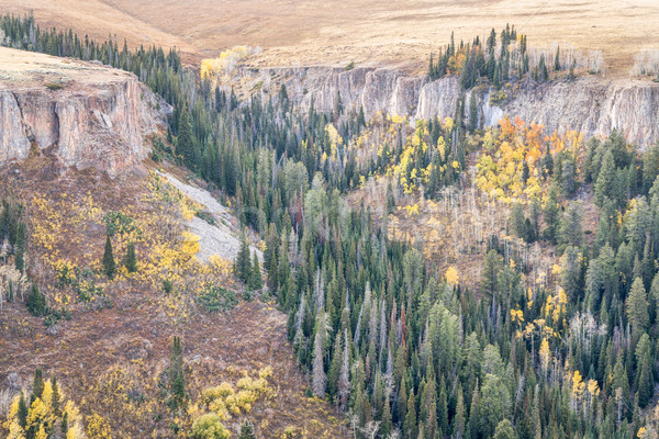 sandstone cliff, aspen and spruce in Colorado Stock photo © PixelsAway