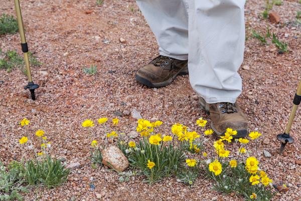 турист пустыне Полевые цветы ног Поход желтый Сток-фото © PixelsAway