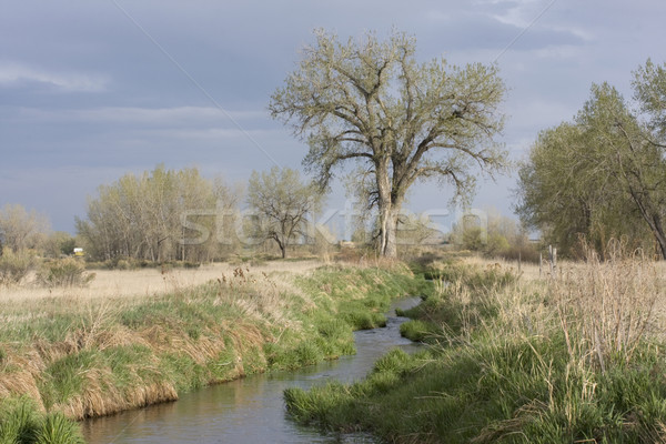 narrow irrigation ditch in springtime Stock photo © PixelsAway