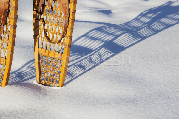 Vintage несут лапа тень снега кожа Сток-фото © PixelsAway