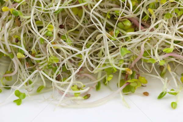 broccoli, clover and radish sprouts Stock photo © PixelsAway
