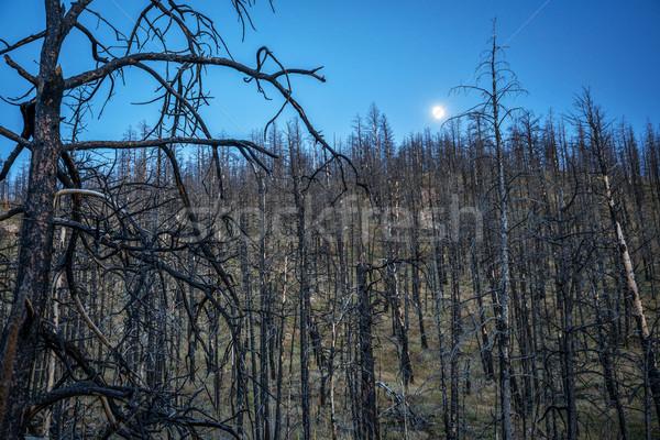 Sosny drzew wildfire księżyc sosna lasu Zdjęcia stock © PixelsAway