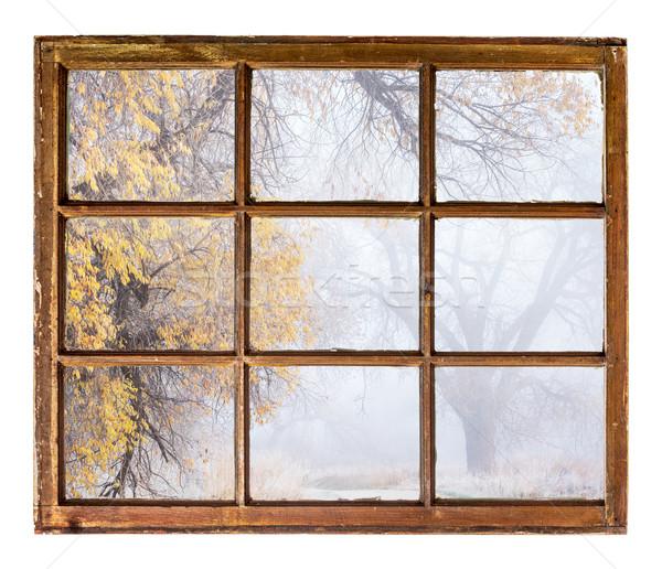 foggy autumn park scene Stock photo © PixelsAway