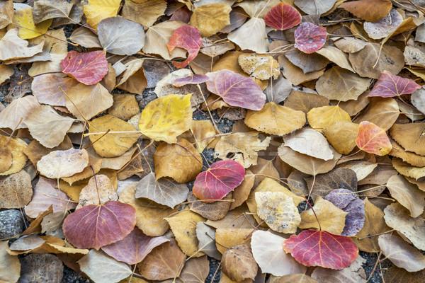 aspen leaves background Stock photo © PixelsAway