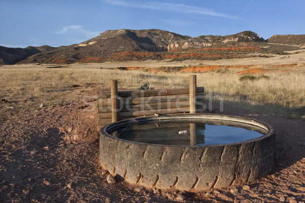 cattle watering hole in Colorado mountains Stock photo © PixelsAway