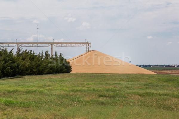 hard red winter wheat - big pile Stock photo © PixelsAway