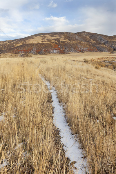 cattle trail in a mountain valley Stock photo © PixelsAway