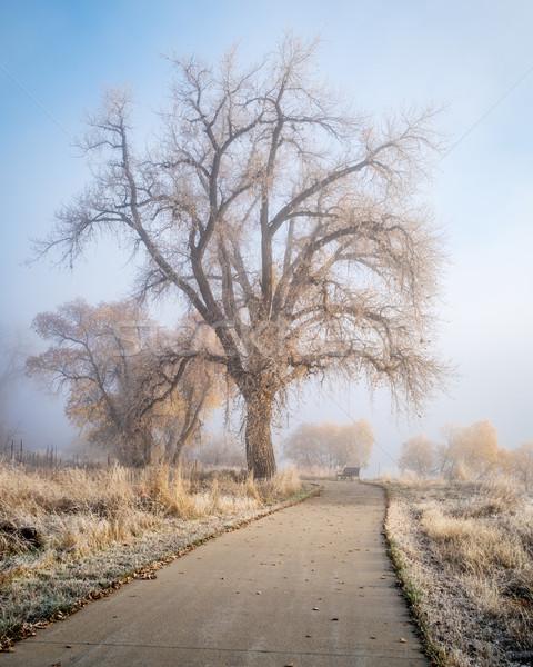 foggy morning on bike trail Stock photo © PixelsAway