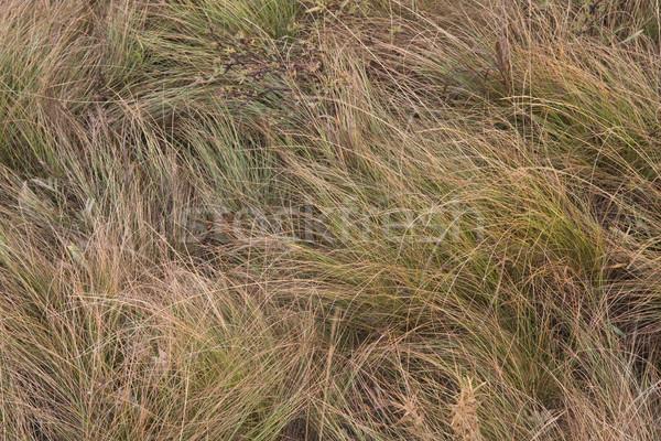 high mountain meadow grass Stock photo © PixelsAway