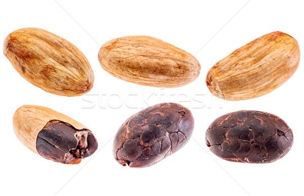 Nyers kakaó bab izolált szett Stock fotó © PixelsAway