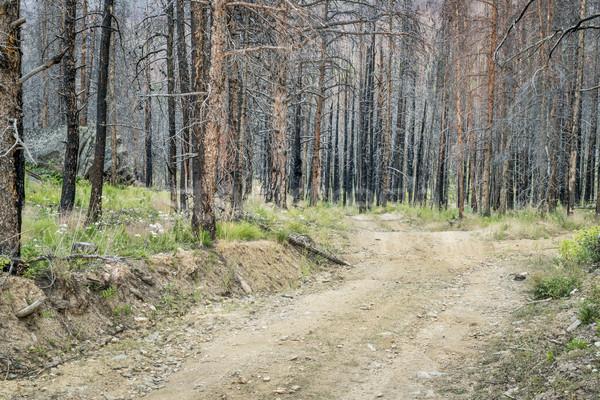 Jeep szlak lasu wildfire starych kwiaty Zdjęcia stock © PixelsAway