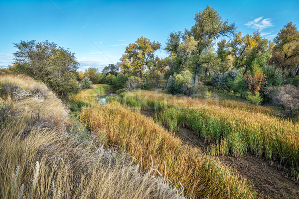swamp and riparian forest in eastern Colorado Stock photo © PixelsAway