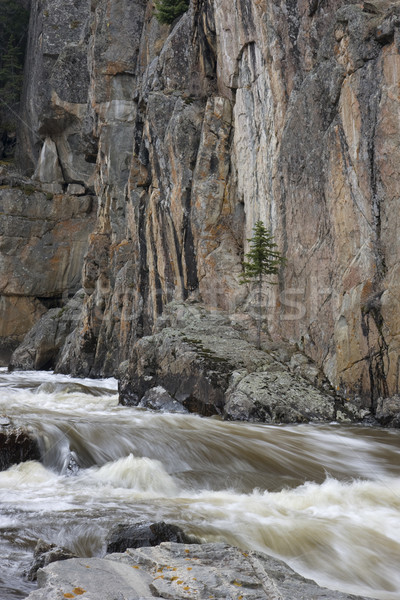 mountain stream in a deep canyon Stock photo © PixelsAway
