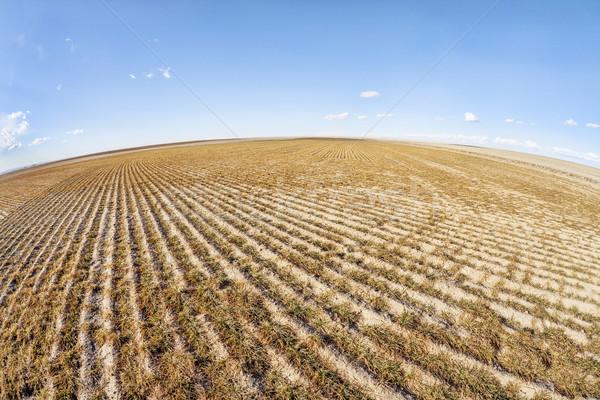 Stockfoto: Veld · vis · oog · perspectief · Oost · Colorado