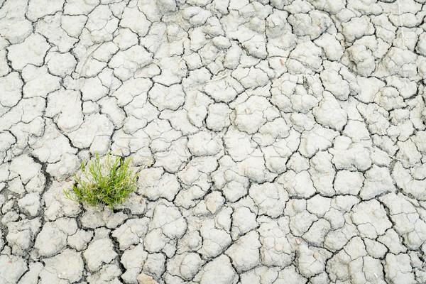 dry and cracked desert soil backgroiund Stock photo © PixelsAway