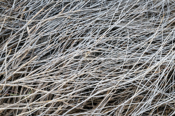 texture of dried desert shrub Stock photo © PixelsAway
