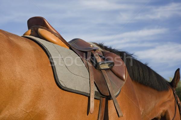 Engels stijl zadel paard stoffig springen Stockfoto © PixelsAway