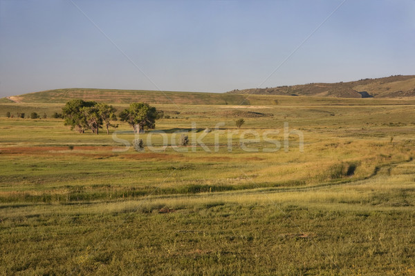 irrigated meadow at Colorado foothills Stock photo © PixelsAway
