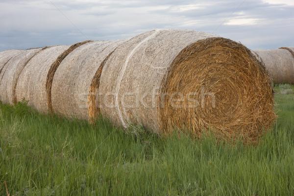 сено зеленая трава зеленый луговой области Сток-фото © PixelsAway