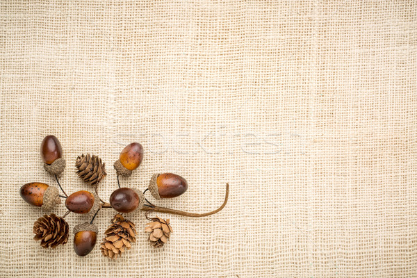 rustic grained wood with fall decoration Stock photo © PixelsAway