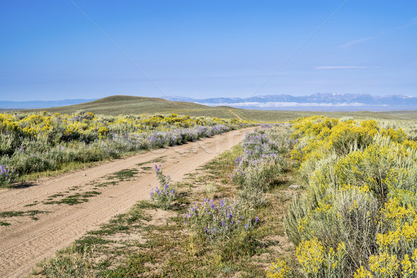 ranch road with wildflowers Stock photo © PixelsAway