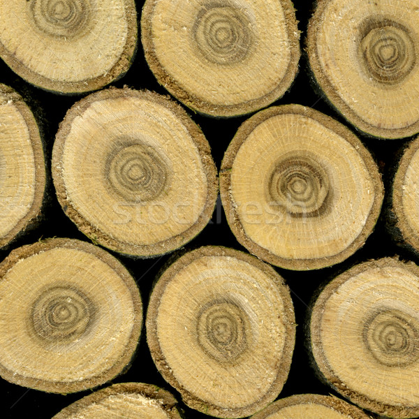 slices of oak wood Stock photo © PixelsAway