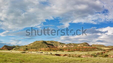Red Mountain Open Space panorama Stock photo © PixelsAway