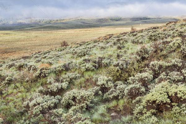 mountain valley with sagebrush Stock photo © PixelsAway