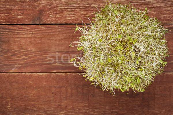 alfalfa and radish sprouts Stock photo © PixelsAway