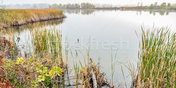 foggy fall day in wetlands Stock photo © PixelsAway
