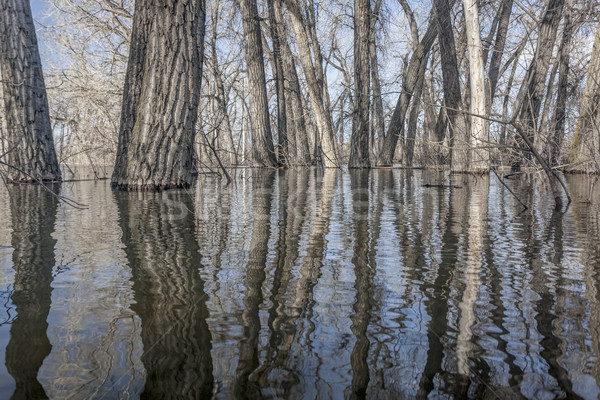 trees submerged in lake water Stock photo © PixelsAway