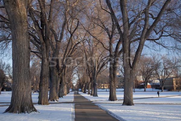 路地 古い ニレ 木 大学 キャンパス ストックフォト © PixelsAway