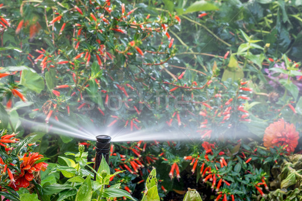 water sprinkler in flower garden Stock photo © PixelsAway