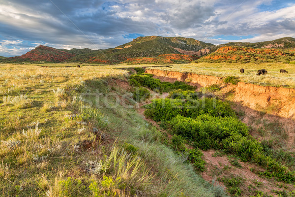 Colorado foothills at sunset Stock photo © PixelsAway