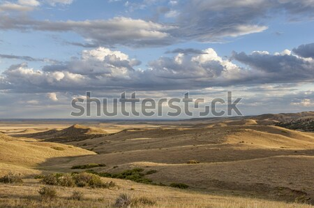 rolling prairie in Colorado Stock photo © PixelsAway