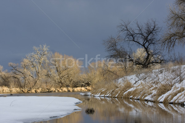 Riparian forest along a river in Colorado prairies Stock photo © PixelsAway