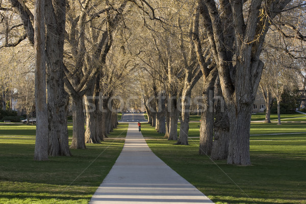 Allee with old American elm trees - the Oval at Colorado State U Stock photo © PixelsAway