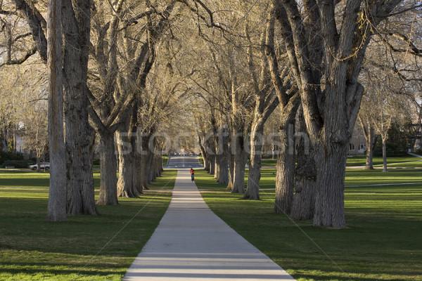старые американский вяз деревья овальный Колорадо Сток-фото © PixelsAway